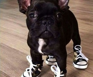Animales, perro, and divertido image