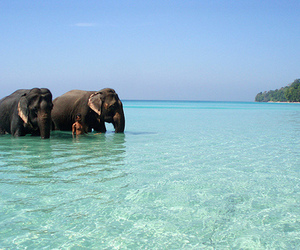 elephant, animal, and summer image