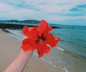 beach, flower, and girl image