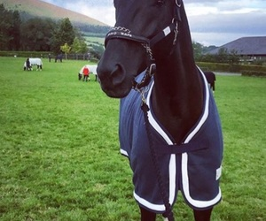 animal, black, and equestrian image