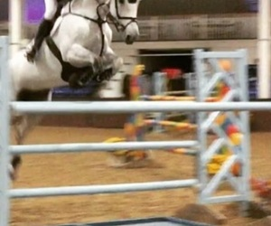 equestrian, jump, and show image