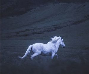 unicorn, wallpaper, and horse image