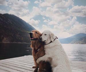 adorable, dog, and sweet image