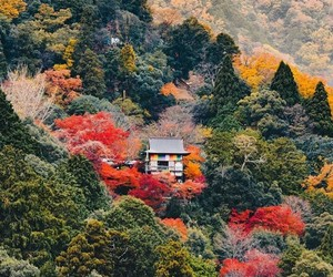 aesthetic, autumn, and colourful image