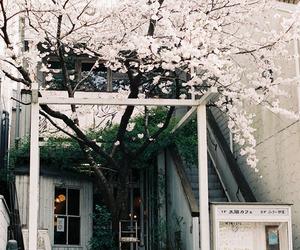 sakura and japan image