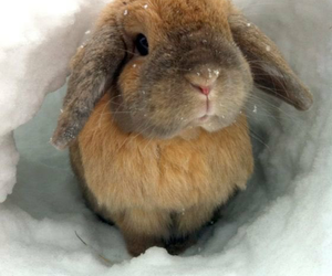 adorable, bunnies, and animals image