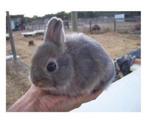 adorable, bunnies, and rabbit image