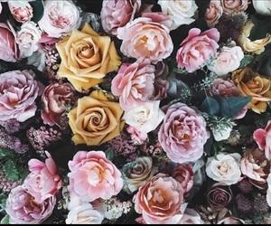 bush, color, and floral image