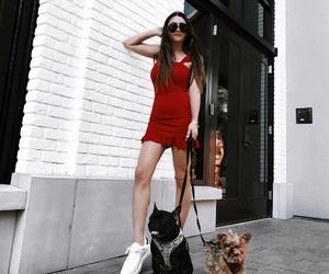 minimalist, sandiego, and pups image