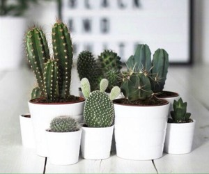 cactus, green, and succulent image