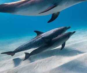 dolphin, nature, and ocean image