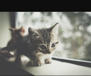 cat, cuccioli, and lovely image