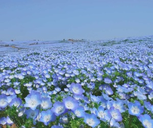 blue, field, and flowers image