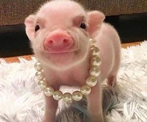 animal, pig, and vegan image