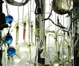 plants and window image