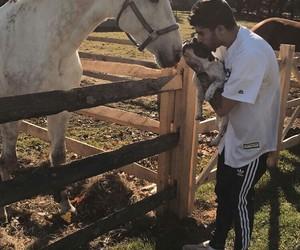 zayn malik, zayn, and horse image