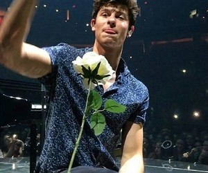 shawn mendes, rose, and shawn image