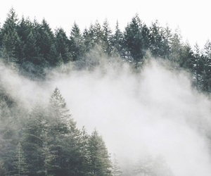 fog and green image