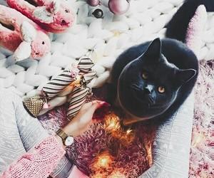 fashion, animals, and cat image
