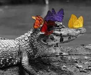 alligator, color popping, and butterflies image
