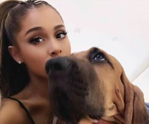 dog and ariana grande image