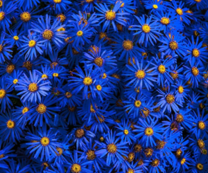 azul, whattsapp, and flores image
