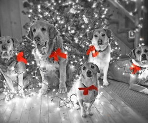 bows, dogs, and lights image
