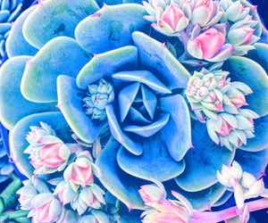 plants, flowers, and succulents image