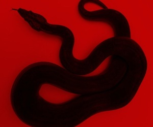 red, snake, and black image