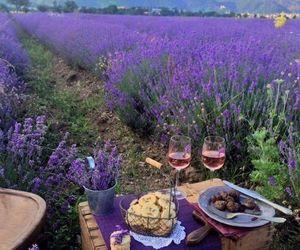 beautiful, lavender, and romantic image