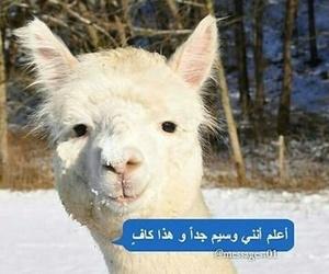 خرابيش, جمال قناعه, and صور مسنجر image