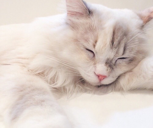 cat, animal, and pastel image