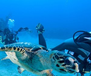andaman holiday packages and scuba diving in andaman image