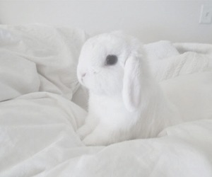 white, cute, and rabbit image