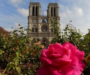 notre dame, paris, and pink image