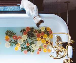 cat, bath, and fruit image
