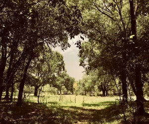 Cordoba, trees, and tumblr image