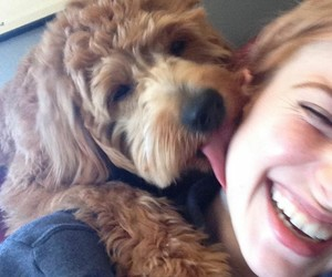 alf, hayley, and dogs image