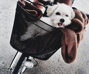 fluffy, adorable, and bike image