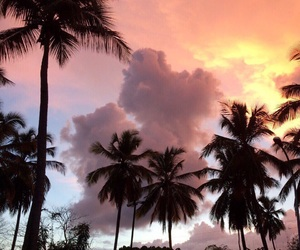 beautiful, sky, and palms image