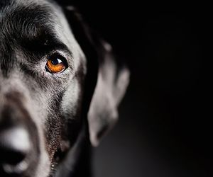 animals, black, and dogs image