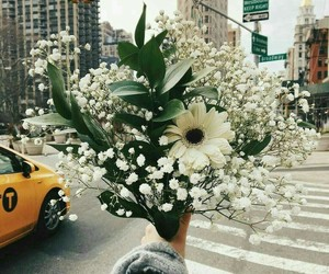 flowers, city, and white image