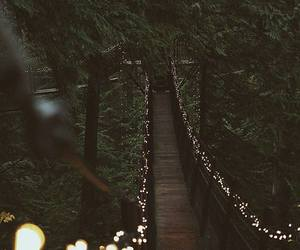light, nature, and forest image