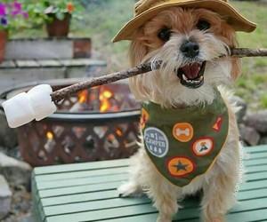 camping and dog image