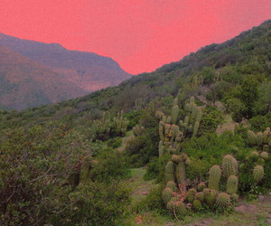 nature, pink, and cactus image