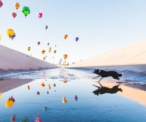 border collie, dog, and hot air balloon image