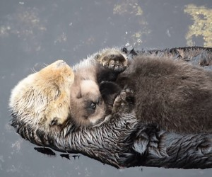 animals, baby, and otter image