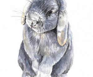 bunny rabbit, cute bunny, and etsy image