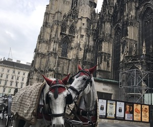 animals, carriage, and church image