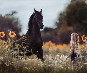 beautiful, black beauty, and blond image